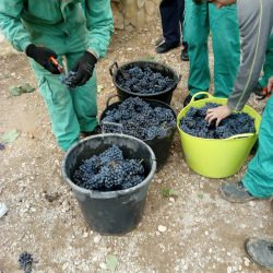 Técnico en Producción Agropecuaria 1